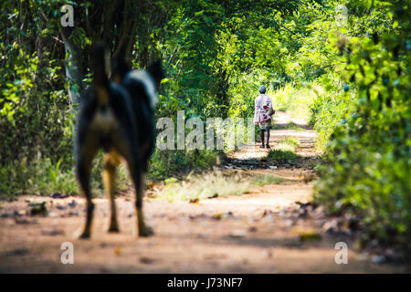 A dog looks on as a man walks away from him in a forest path close to Sigiriya, Sri Lanka. - Stock Photo