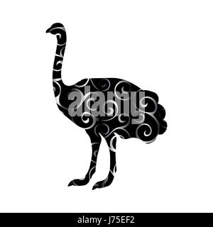 Ostrich bird color silhouette animal - Stock Photo