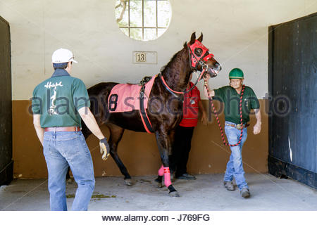 HialeahMiami Florida Hialeah Park quarter horse racing racetrack groom trainer stall - Stock Photo