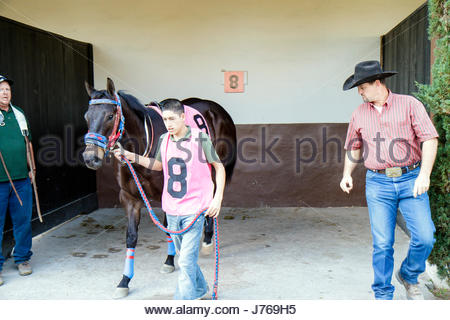 HialeahMiami Florida Hialeah Park quarter horse racing racetrack groom Hispanic man trainer stall - Stock Photo