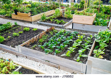 Miami Beach Florida Victory Community Garden plots growing plants gardening - Stock Photo
