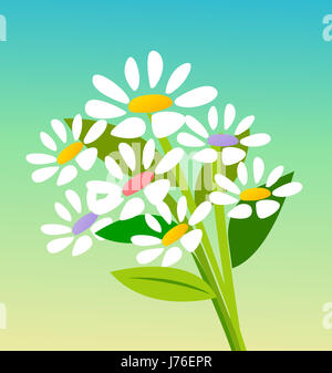 flower plant daisy close leaf single isolated colour model design project - Stock Photo