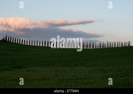 Trees growing on field against sky during sunset - Stock Photo