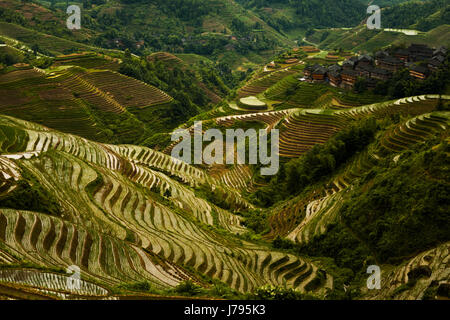 travel tourism agriculture farming china rice terrace beautiful beauteously - Stock Photo