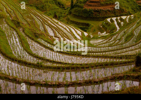 steep terraces flooded rice backbone beautiful beauteously nice travel culture - Stock Photo