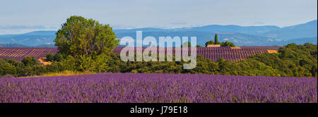 Panoramic nature landscape of lavender field in France, Provance - Stock Photo