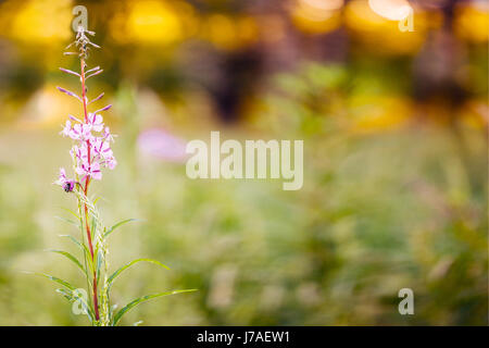 color flower background in summer. Macro shot. Copyspace for text and design. - Stock Photo