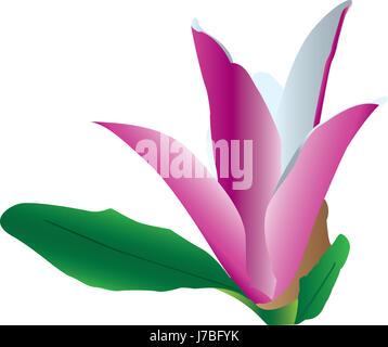flower plant bloom blossom flourish flourishing illustration purple magnolia - Stock Photo