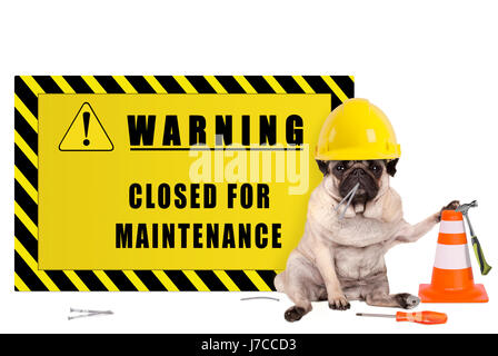 pug dog with yellow constructor safety helmet and warning sign with text closed for maintenance, isolated on white - Stock Photo