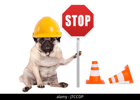 pug dog with yellow constructor safety helmet and red stop sign on pole, isolated on white background - Stock Photo