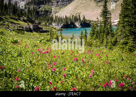 Wild flowers glacier national park iceberg lake landscape - Stock Photo