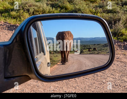 An Elephant walking down a road in Southern Africa reflected in a car mirror - Stock Photo