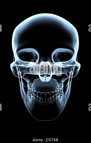 blue front skull head blue education isolated medicinally medical graphic - Stock Photo