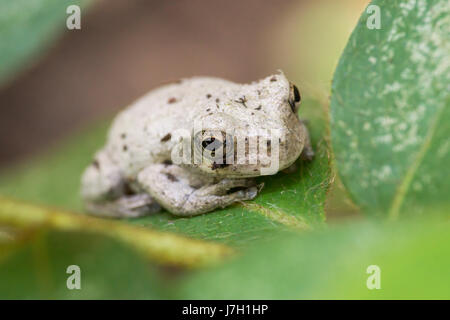 White toad on a leaf in the garden bushes - Stock Photo