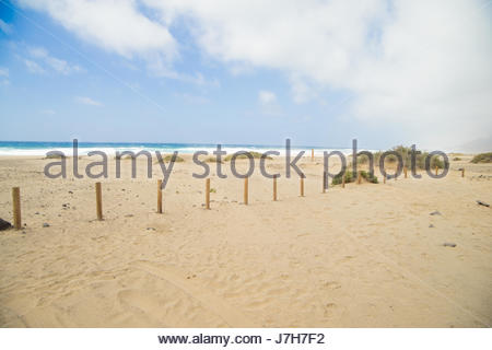 Sandy beach with blue sky on the island of Fuerteventure, Spain.With poles through the sand and sunny weather. - Stock Photo