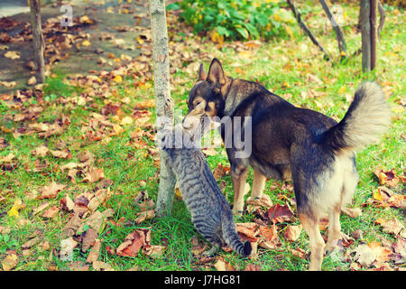 Dog and cat best friends walking together outdoor in a garden in autumn - Stock Photo