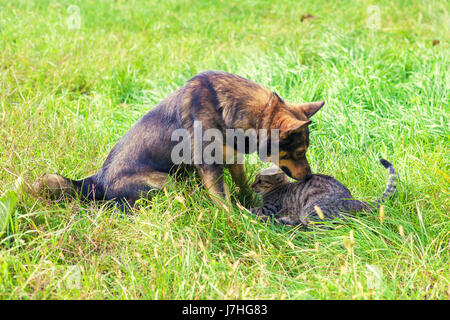 Cat and dog are playing together on the grass - Stock Photo