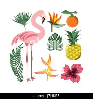 beautiful set icon with exotic flamingo and tropical elements - Stock Photo