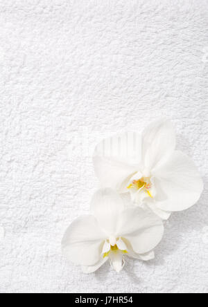 Two  orchids   lying on white terry towel.  View from above. Spa concept. - Stock Photo