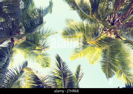 Palms against the blue sky.  Low Angle View. Toned image - Stock Photo