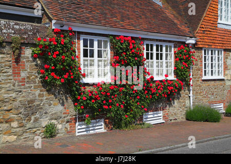 Red roses garlanding windows in Winchelsea, East Sussex, UK, GB - Stock Photo