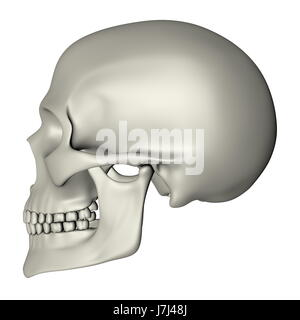 human human being skull skeleton physiology side head education isolated - Stock Photo
