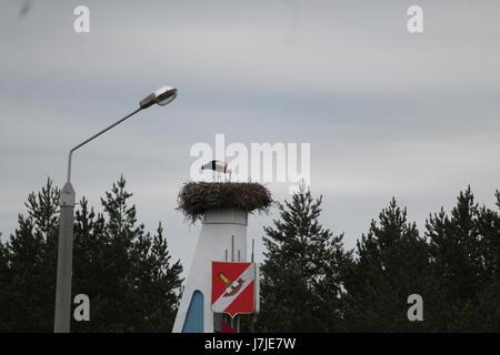 white stork(mother) feeding her chicks in big nest in rainy spring day - Stock Photo