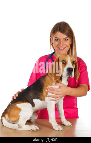 Picture of a dedicated young veterinarian with a little beagle - Stock Photo
