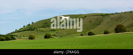 Panorama of Westbury White Horse. Hill figure created by exposing white chalk on the escarpment of Salisbury Plain - Stock Photo