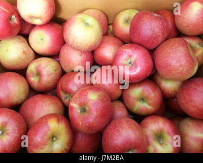 Delicious red apple - Stock Photo