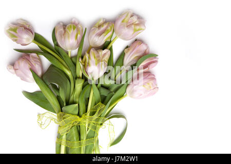 pastel present greeting beautiful beauteously nice isolated colour flower plant - Stock Photo