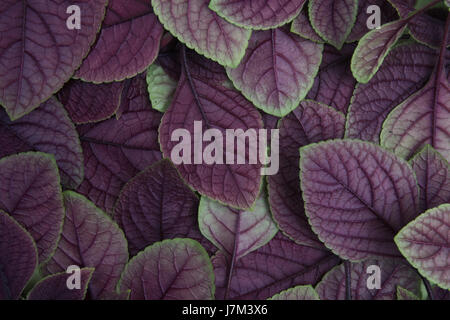 Creative layout made of green leaves. Flat lay. Nature background - Stock Photo