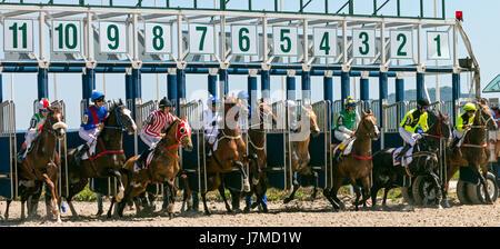 Start horse race - Stock Photo