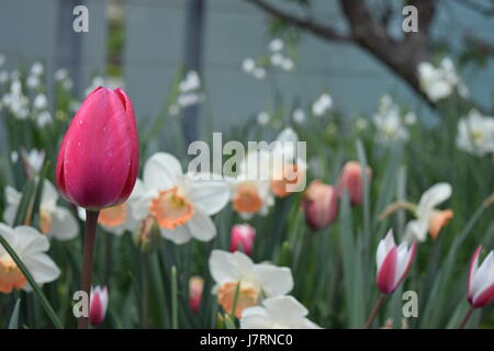 Spring beauty in an urban park - Stock Photo