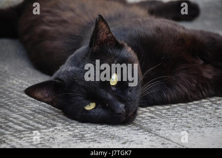 Black cat with green eyes relaxing on stone slabs avoiding the heat of the sun - Stock Photo