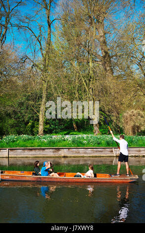 Tourists Punting on the river cam in Cambridge on a beautiful sunny day - Stock Photo