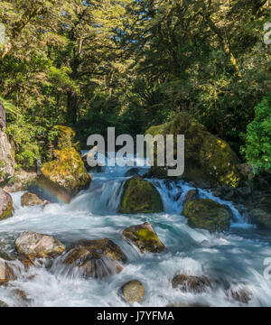River flowing through lush vegetation, temperate rainforest, Fiordland National Park, Southland, New Zealand - Stock Photo