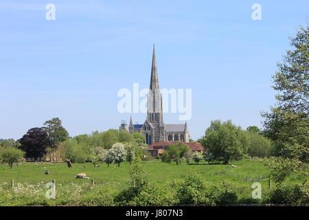 salisbury cathedral - Stock Photo