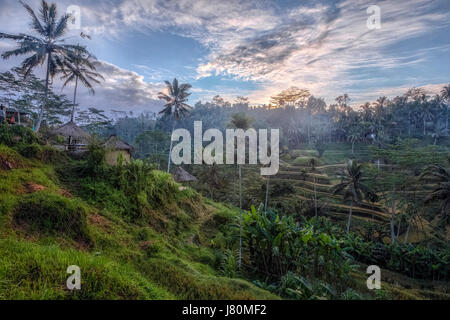 Tegalalang, Rice Fields, Ubud, Bali, Indonesia, Asia - Stock Photo