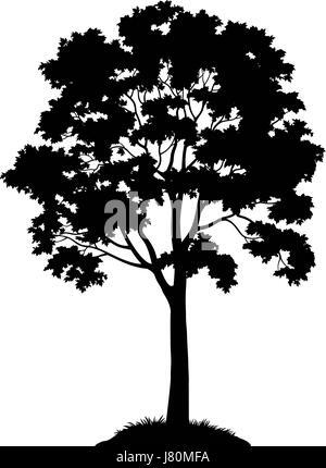 Maple Tree Silhouette Stock Vector Art & Illustration ...