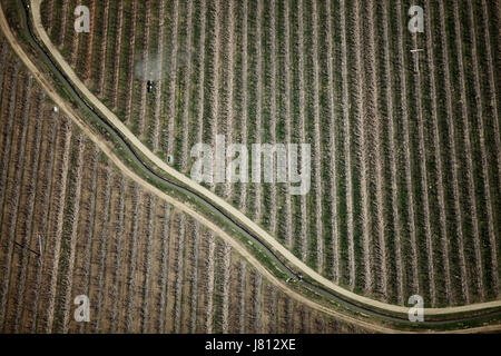 An aerial view of chemicals being applied to fruit orchards before the leaves begin to grow, in Washington state, - Stock Photo