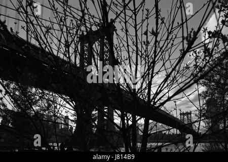 View through tree branch silhouettes across the East River of the Manhattan Bridge from DUMBO in Brooklyn, New York. - Stock Photo