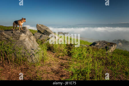 UK Weather: Ilkley, Wharfedale , West Yorkshire, UK. 26th May 2017.  Cloud inversion looking over Ilkley Moor - - Stock Photo