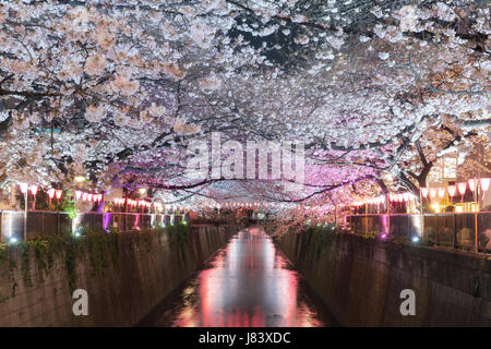Cherry blossom lined Meguro Canal at night in Tokyo, Japan. Springtime in April in Tokyo, Japan. - Stock Photo