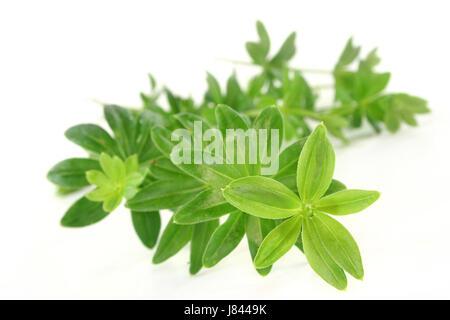 flavour taste smell woodruff herbs spice green alcohol spring flavour taste