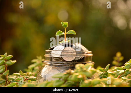 Coins put in glass and stack coins for business and tax season. - Stock Photo