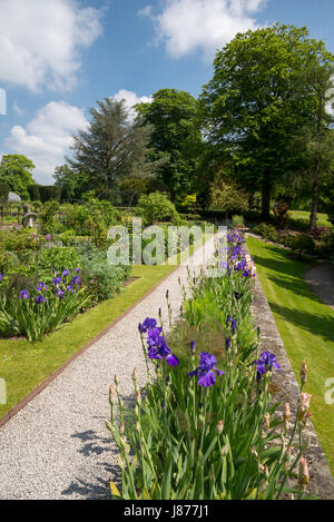 Border of Iris on the scented terrace at Thornbridge hall gardens near Great Longstone, Derbyshire, England. - Stock Photo