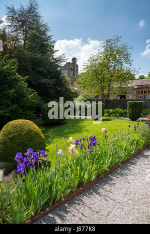 Flowering bearded Iris on the scented terrace at Thornbridge hall gardens near Great Longstone, Derbyshire, England. - Stock Photo