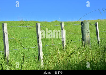 Fence from barbed steel wire between wooden poles dividing green pasture on sunny day with blue sky. - Stock Photo