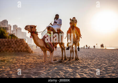 Camel with tourists on the JBR beach at sunset in Dubai - Stock Photo